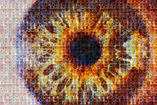 slide20180819-oogfoto-HR-Tiff-9930-hoofdfoto-mozaiek-groot-VERSIE-4
