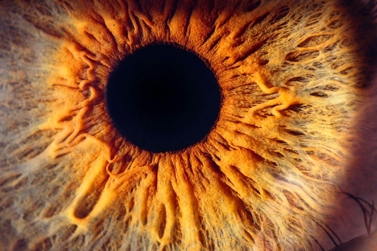 oogfoto experience persoonlijk kunstwerk amsterdam huis irisfoto oogfotografie irisfotogafie